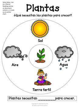 Plantas y el ambiente