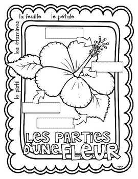 Plants in FRENCH - Les plantes