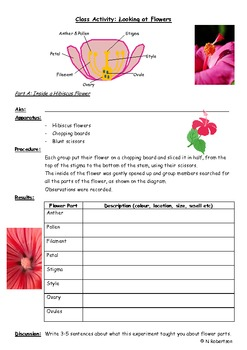 Planting Flowers Science Lesson Three