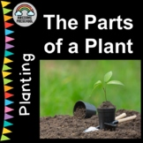Planting/Gardening unit/study - The Parts of a Plant