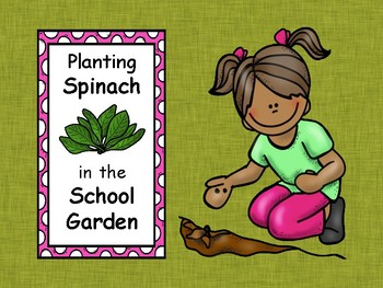 Planting Spinach in the School Garden