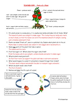 Planting Tomatoes Science Lesson Two