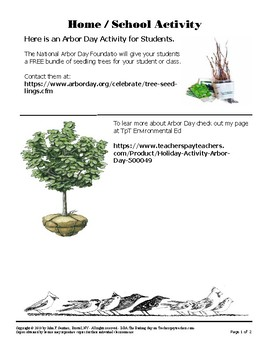 Planting Trees For Birds