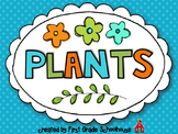 Plant Activities