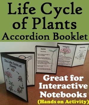 Life Cycle of a Plant Activity Foldable: Seeds, Pollinatio