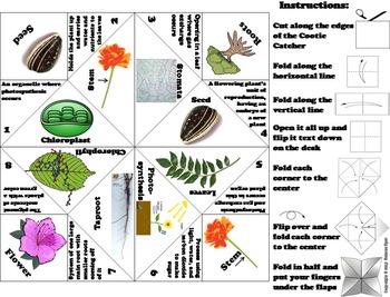 Parts of a Plant Foldable: Stem, Seeds, Roots, Stamen, Petal, Anther, Pistil etc