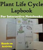 Life Cycle of a Plant Activity/ Foldable: Seeds, Pollination & Parts of a Flower