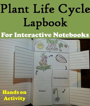 Life Cycle of a Plant Activity/ Foldable: Seeds, Pollinati