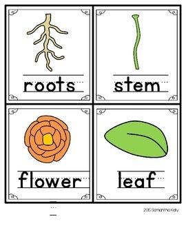Plants Write the Room Center