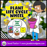 Plant Life Cycle Activities (Plant Life Cycle Craft)