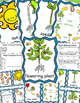 Plants Life Cycle, Write the Room Posters, Writing Activit