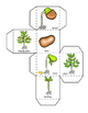 Plants Life Cycle, Math, Graphing Activities, For Plant Un