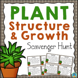 Plant Structure and Growth Scavenger Hunt Activity/Task Cards