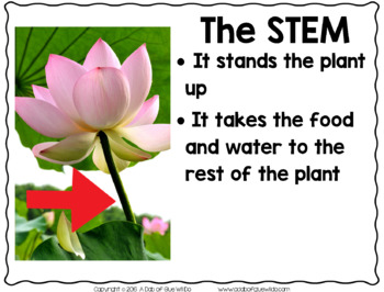 Plants (PowerPoint, Science Lessons, Printables)