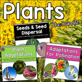 Plant Adaptations, Seeds, Pollination Bundle