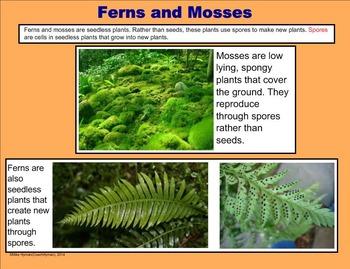 Plants - A Fourth Grade SMARTBoard Introduction