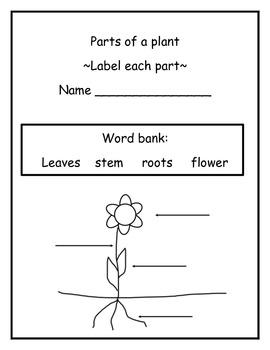 Plants All Around