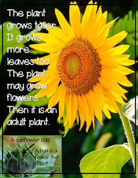 Plants -An ELA Nonfiction Unit with Interactive Notebook and Emergent Readers