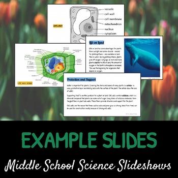 Plants - An Overview: A Life Sciences Slideshow!