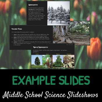 Seed Plants: A Life Sciences Slideshow!