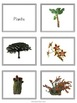 Plants, Animals, Fungi sorting
