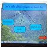 Plants & Animals Together
