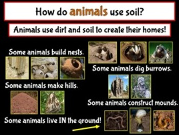 Plants, Animals and their Environment PowerPoint (Interdependence of Animals)