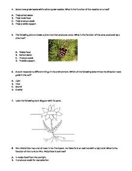 Plants Assessment
