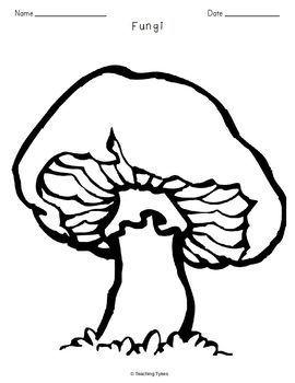 Fungi Biology Science Crossword Coloring Worksheet Middle School