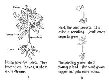 Plants Book