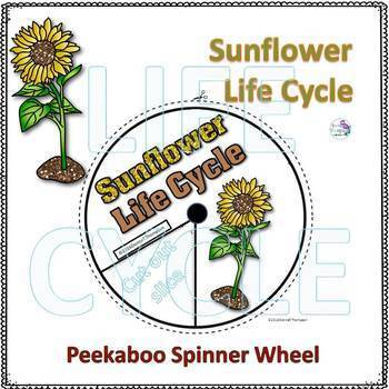Plants Life Cycle Spinner Bundle #1