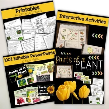 Plants Bundle Units – Life Cycle of Plants, Photosynthesis, Parts of a plant