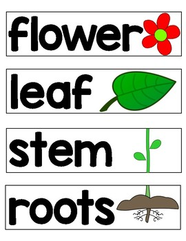 Plants Cards and Signs