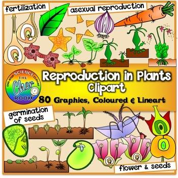 Plants Clipart (Secondary Standards)