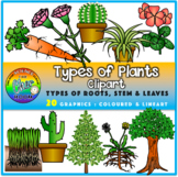 Plants Clipart - Types of Roots, Stem and Leaves