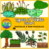 Plants Clipart: Vascular and Non-Vascular Plants