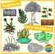 Plants Clipart: Vascular and Non-Vascular Plants