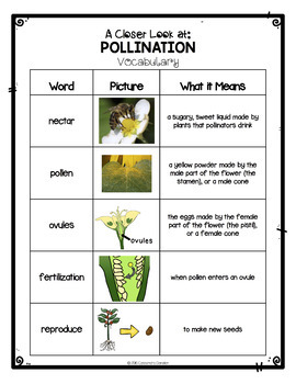 Plants: Differentiated Pollination Reading Passage, Vocabulary & Comprehension