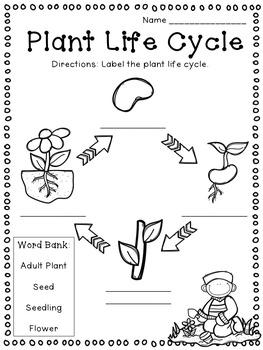 Plants: Flipchart and Worksheets