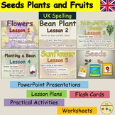 Plants Flowering Plants Life Cycle Sunflower Bean Plant Wo