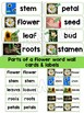 Plants Flowers Experiments, Parts of Flower Word Wall Cards, Pages, Craftivities