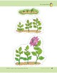 Plants Have Seeds: Storyboard Pieces