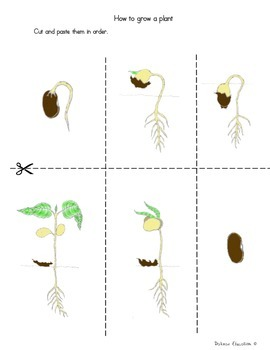 Plants  | How grow plant