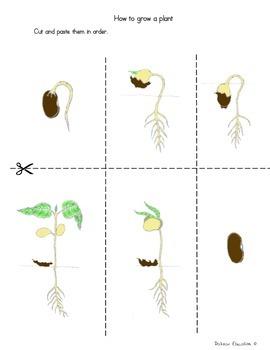 plants how grow plant by dalizas education tpt. Black Bedroom Furniture Sets. Home Design Ideas