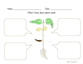 Plants  | How grow plant
