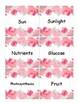 Plants Input Chart Cards (English & Spanish)