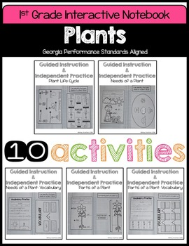 Plants Interactive Notebook (1st Grade)