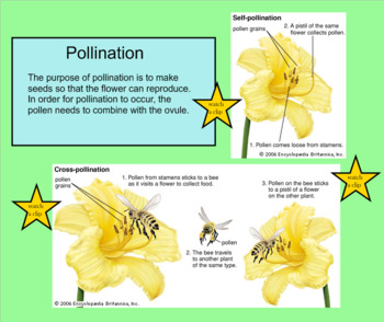 Plants Interactive SMARTboard Lesson - 11 pages - Instructional