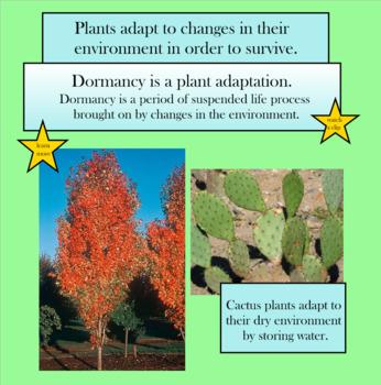 Plants Interactive SMARTboard Lesson - VA 4th Grade Science SOL Unit
