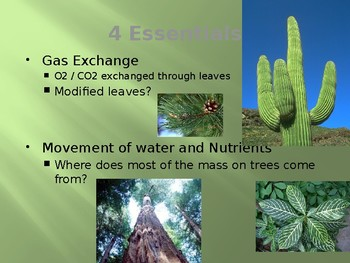 Plants Introduction Powerpoint